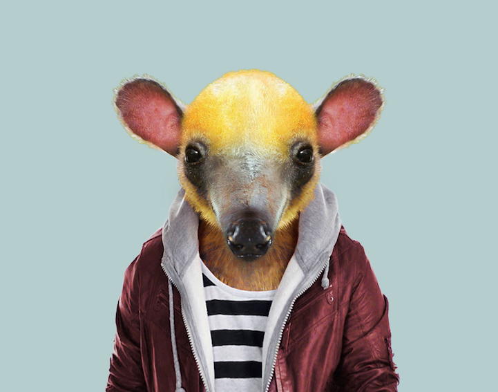 yago partal baby animal portraits animals dressed like humans tamandua
