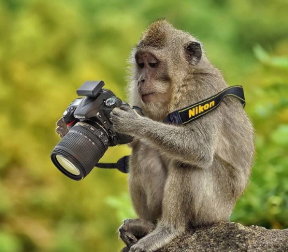 17 Funny Animals Appear to Be Taking Photos with Cameras