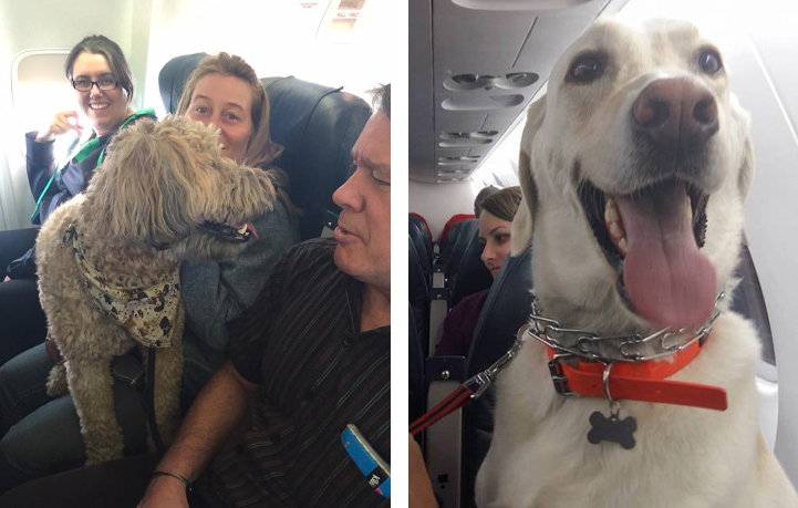 Canadian airlines break their own rules allow wildfire for Airlines that allow dogs in cabin
