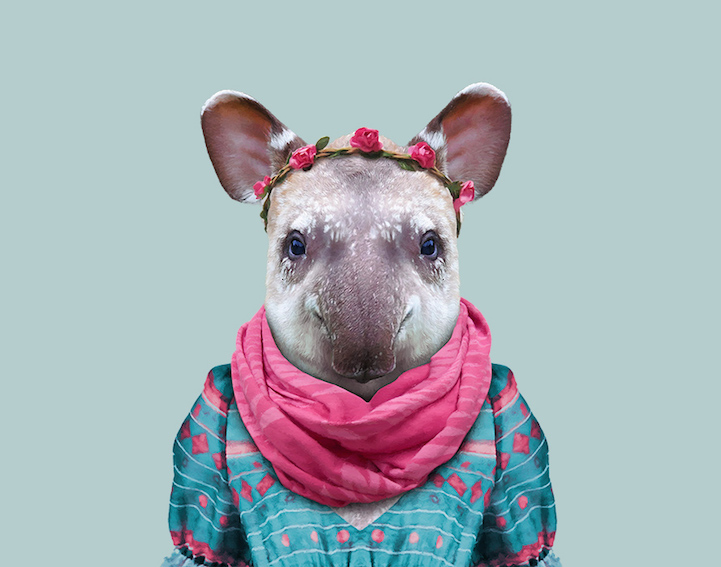yago partal baby animal portraits animals dressed like humans tapir