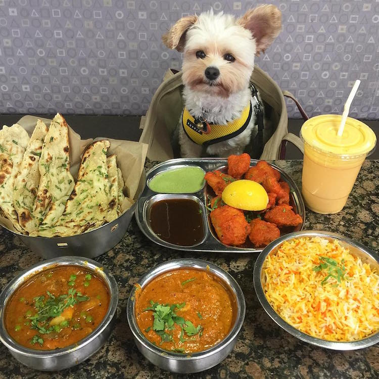 pet friendly restaurants for popeye the stray dog