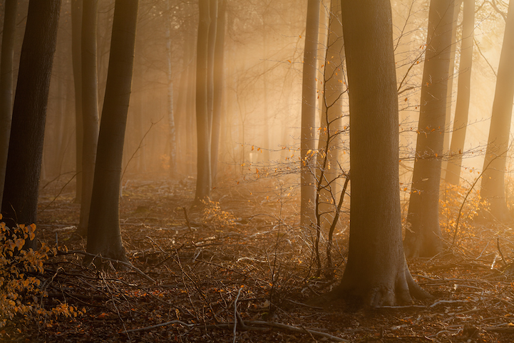 Dramatic Nature Photos Illuminate The Quiet Mystery Of The