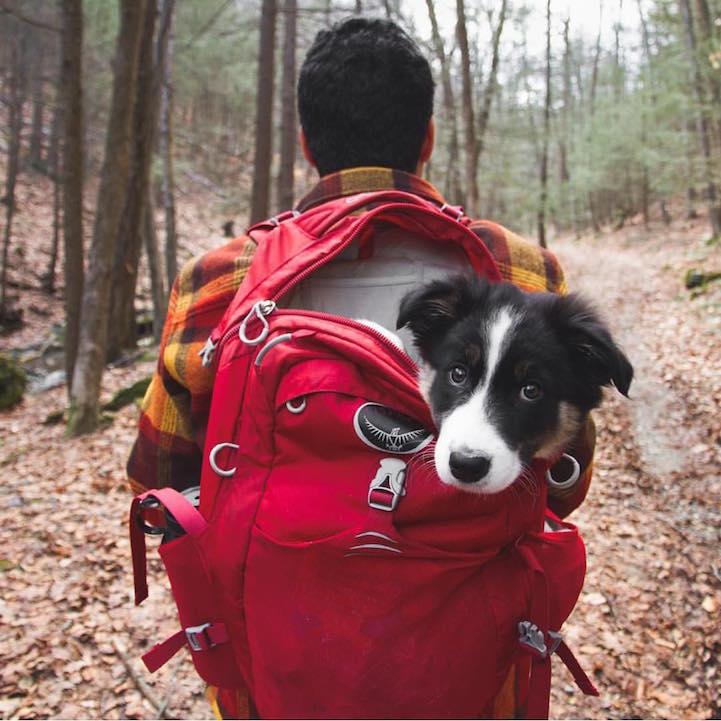 Heartwarming Photos Highlight Adventurous Bond Between Pups and Humans