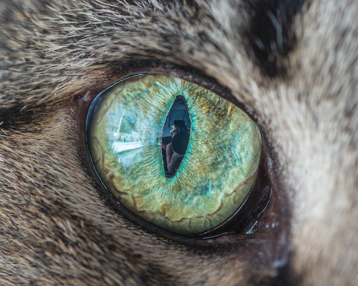 Cat With One Eye Meme