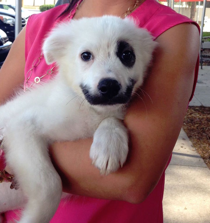 Adorable Puppy Born With Black Face Markings Naturally Resembles The