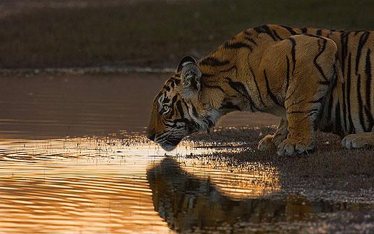 Unbelievable nature photos africa