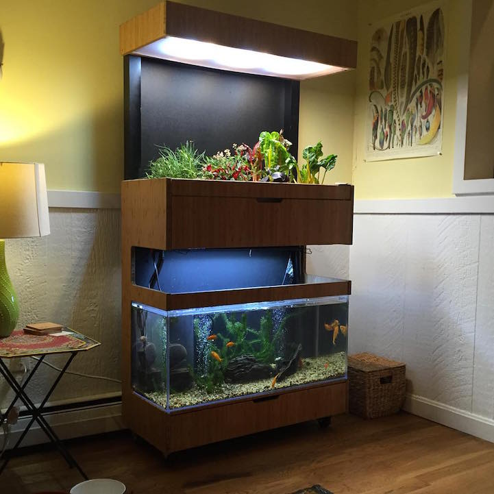 Aquaponics System In A Mobile Home