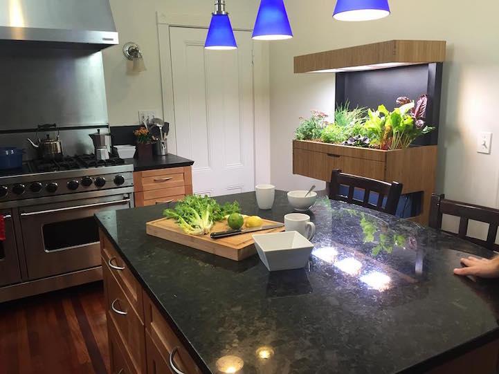 Indoor Veggie Garden Hi tech indoor garden uses aquaponics to grow a salad a day workwithnaturefo