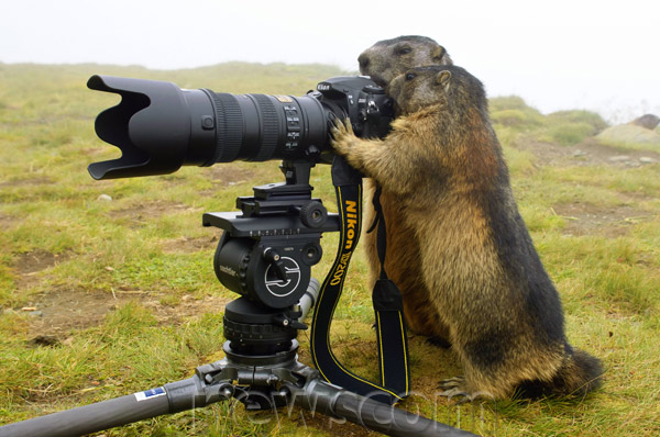 shoot animals with camera not with a gun Shoot animal with a camera not with gun quotes - 1 the problem here is with a human being, not with a monster, not with an animal the human being does things that even the monster does not do, because the human is more sophisticated.