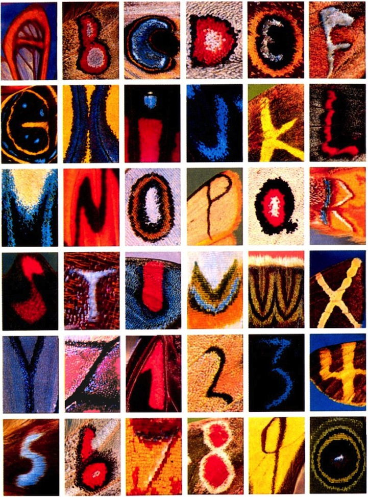 Alphabet on Butterfly Wings