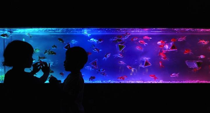 Japan 39 S Wild Aquarium Art