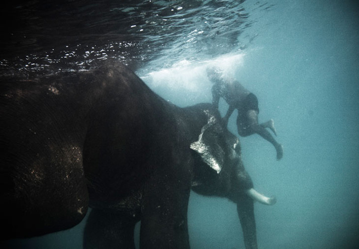 Underwater Photography by Claudia Legge — Designcollector