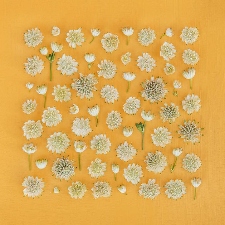 Visually Soothing Arrangements Of Everyday Objects Offer