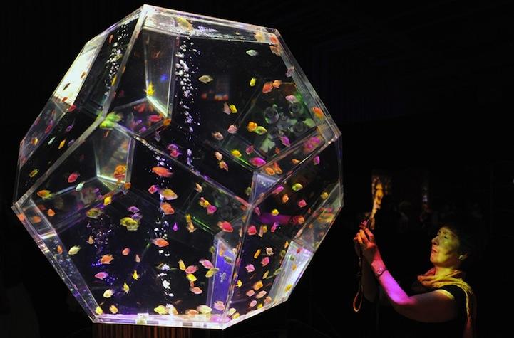 Japan S Wild Aquarium Art