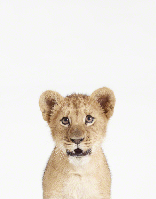 Most Adorable Baby Animal Prints