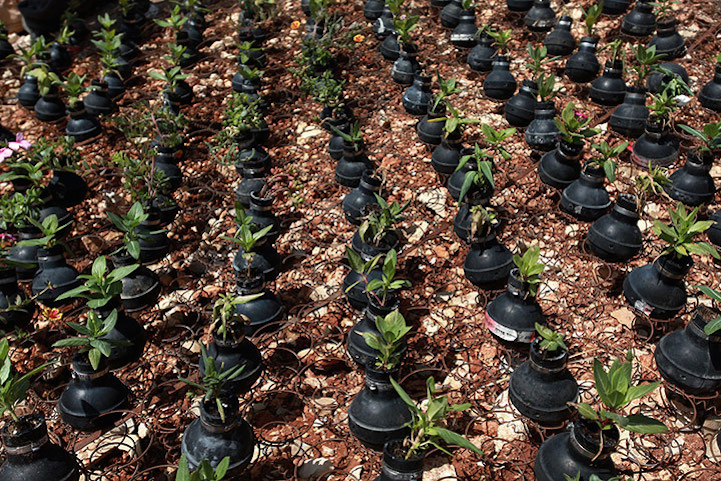 palestinian villagers plant memorial garden using old tear gas canisters. Black Bedroom Furniture Sets. Home Design Ideas