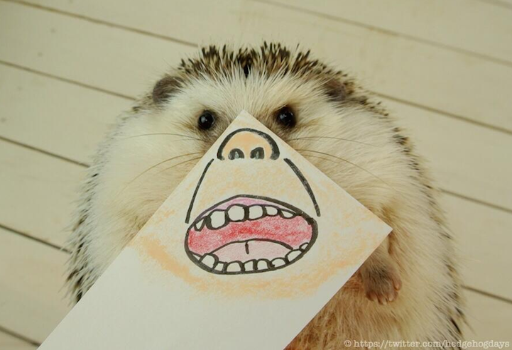 marutaro hedgehog