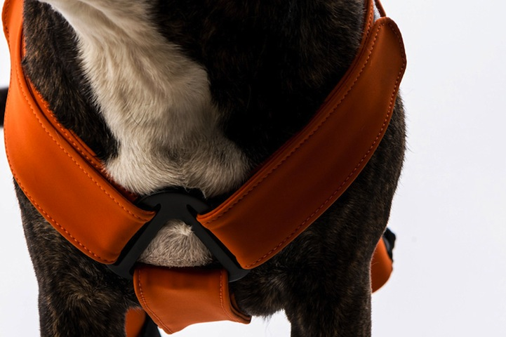 Can Harness Be Adjusted As The Dog Grows