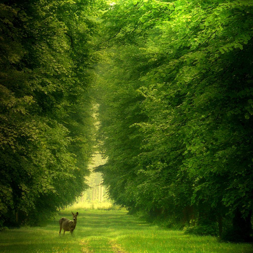 عکس های زیبای طبیعت فانتزی