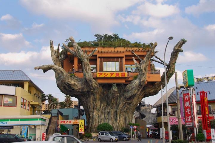 Okinawa 39 s banyan treehouse restaurant - Mondo casa shop ...