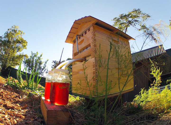 Flow Hive Extracts Honey On Tap Without Disturbing Bees