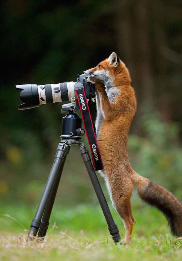 Image of: Top 200 My Modern Met 17 Funny Animals Appear To Be Taking Photos With Cameras