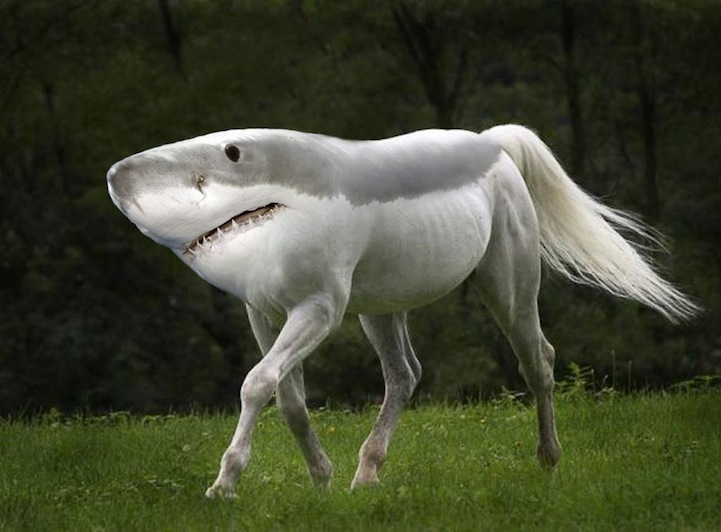 Image of: Top 200 Funny Animal Mashups My Modern Met Morphed Animals Created Weird New Species In Funny Mashup Series