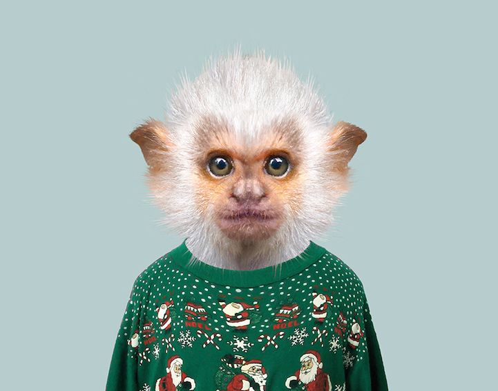 yago partal baby animal portraits animals dressed like humans marmoset