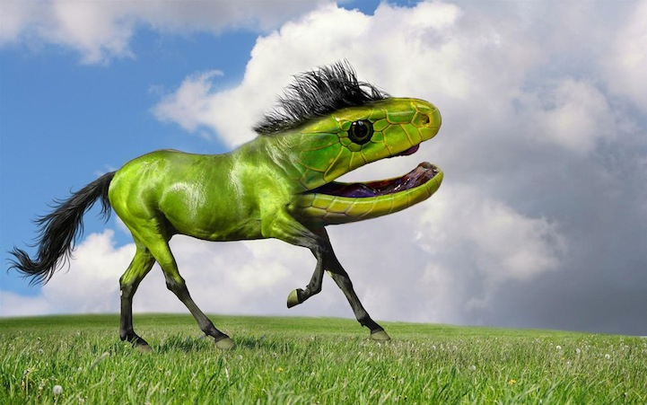 wierd animal mashup