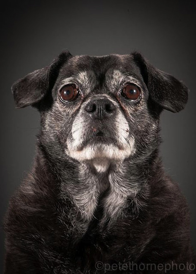 Dog Food For Very Old Frail Dogs
