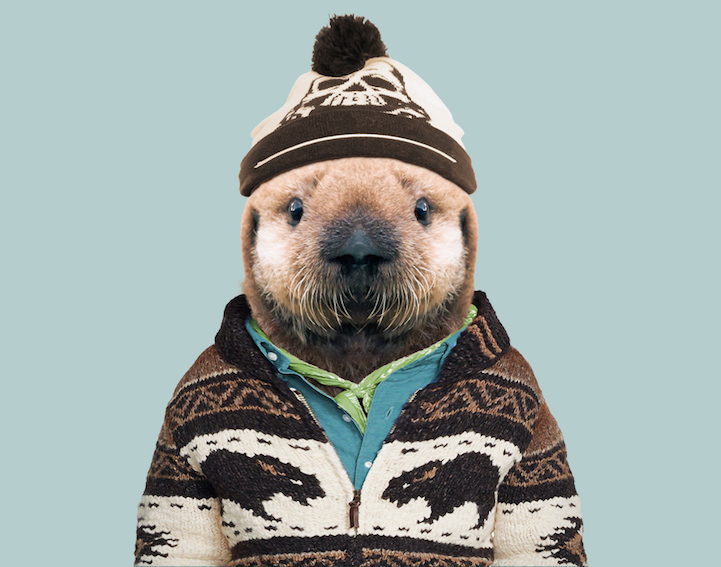 yago partal baby animal portraits animals dressed like humans sea otter