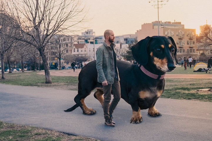 Guy Photoshops Tiny Dog to Reflect How Big She Thinks She Is