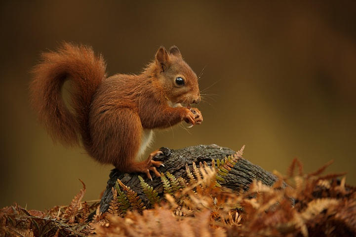 Cute Animal Photographer Edwin Kats