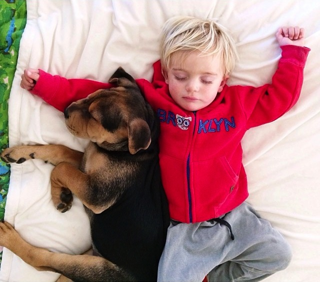 Adorable Toddler And His Puppy Continue Napping Together - Toddler naps with puppy