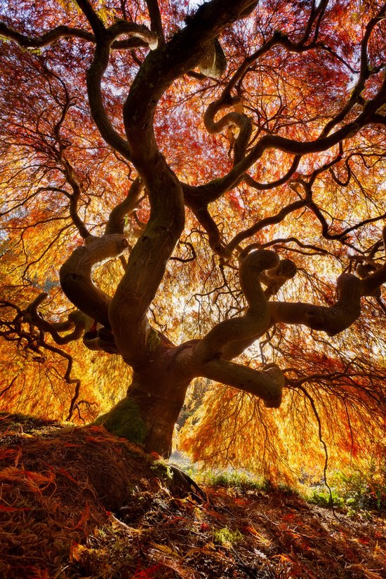 12 Fantastic Photos Of Fall Trees Exploding With Color My Modern Met