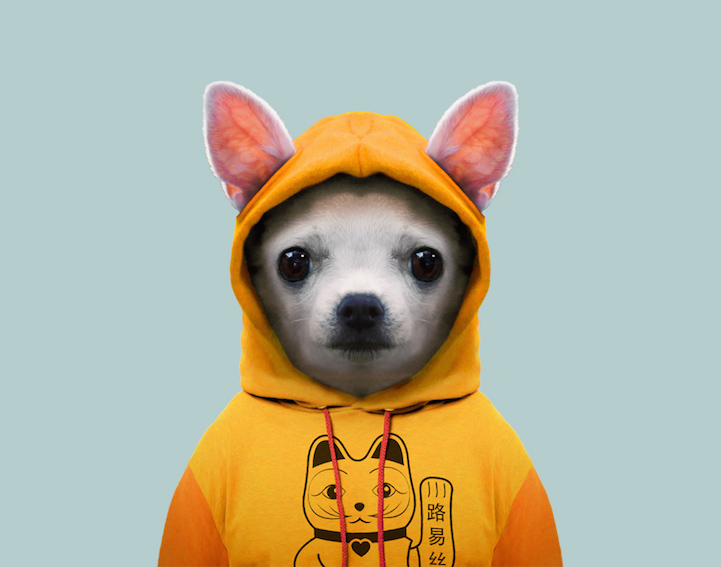 yago partal baby animal portraits animals dressed like humans dog