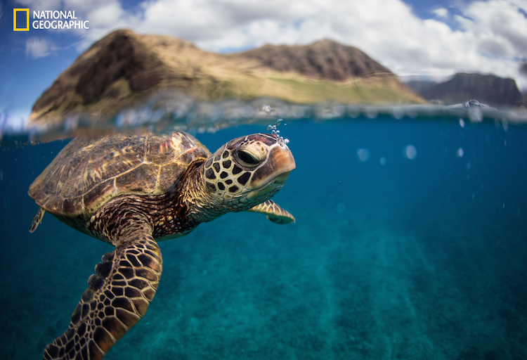 National geographic animal photography