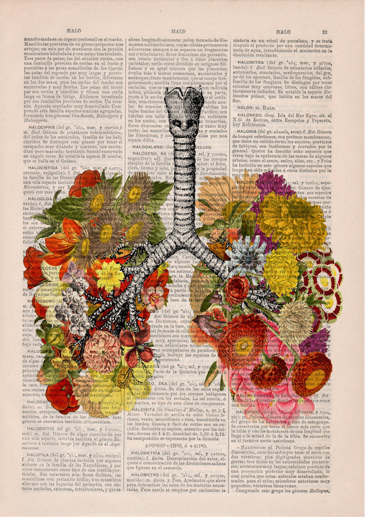 Beautiful Floral Anatomy Illustrations Give New Life To Discarded