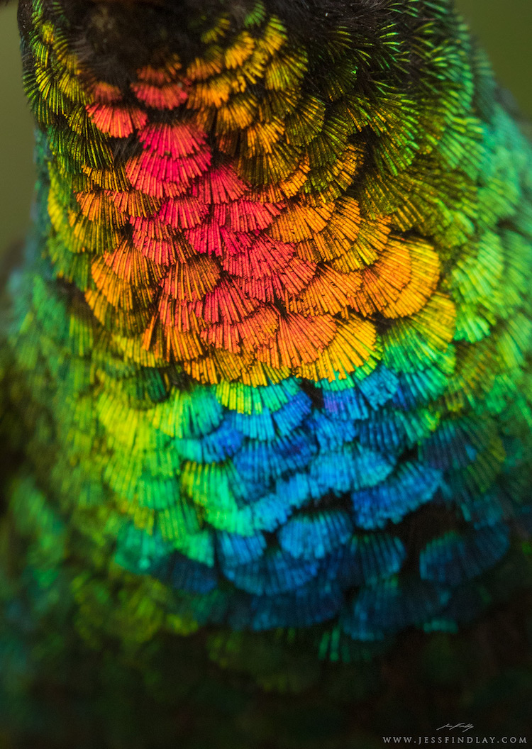Capturing Photo Of Kaleidoscopical Feathers