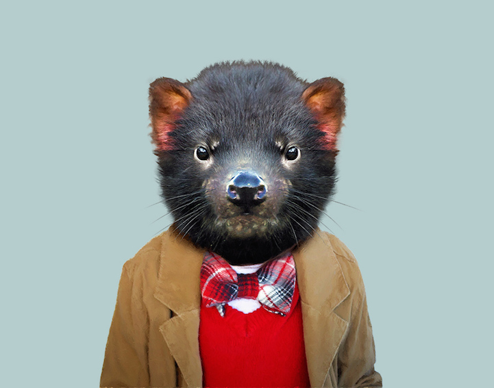 yago partal baby animal portraits animals dressed like humans tasmanian devil