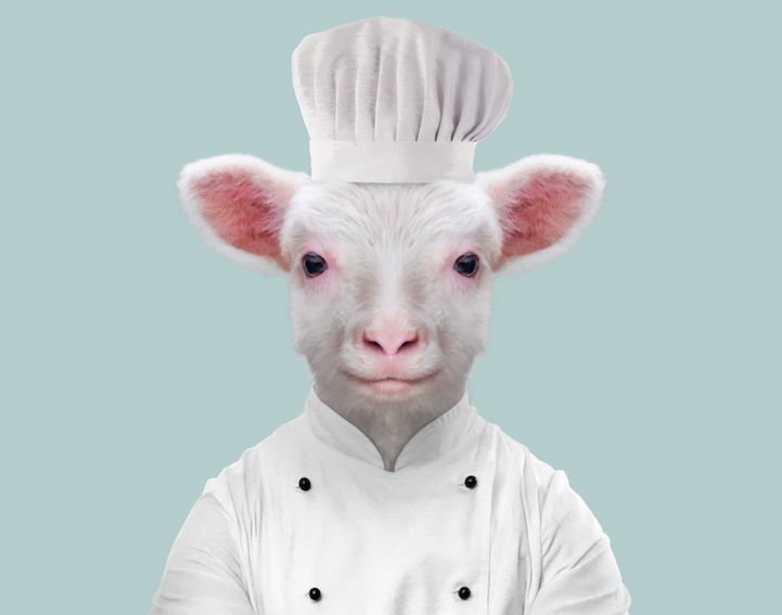 yago partal baby animal portraits animals dressed like humans sheep