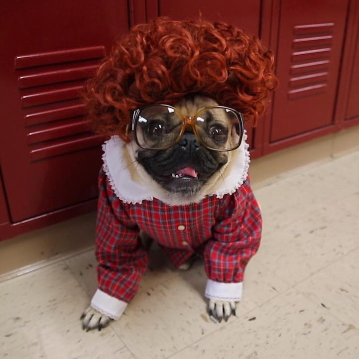 """""""Stranger Pugs"""" Hilariously Reimagines """"Stranger Things ... Hilarious Images For Facebook"""