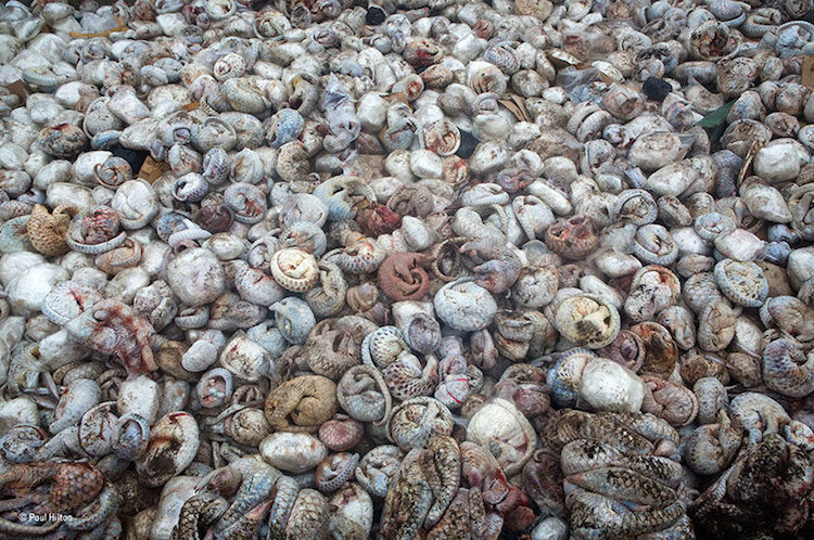 Wildlife Crime Captured In Image Of Pangolins
