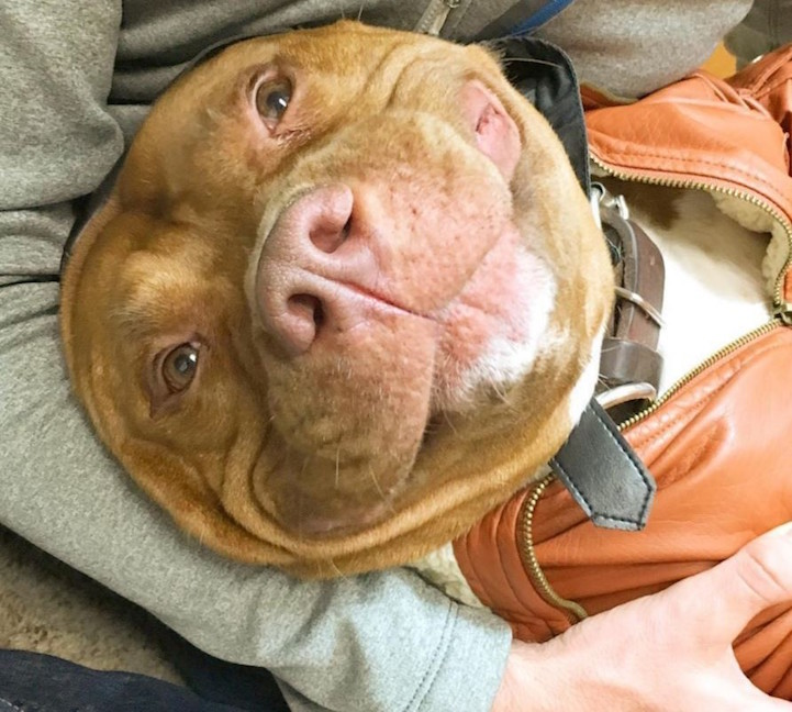 heartwarming dog who cant stop smiling since being