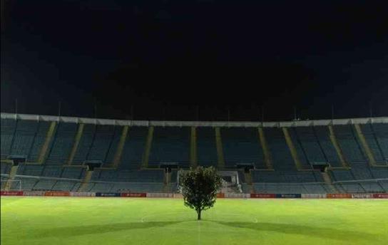 Seamless Vinyl Photography Backdrop Football Stadium Match: Magnolia Tree Is Soccer Field's Centerpiece! (6 Pics