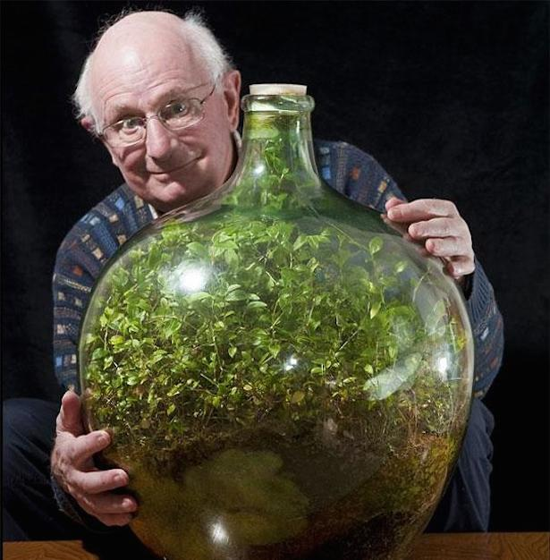 Thriving Garden in Sealed Bottle Hasn't Been Watered in Over 40 Years