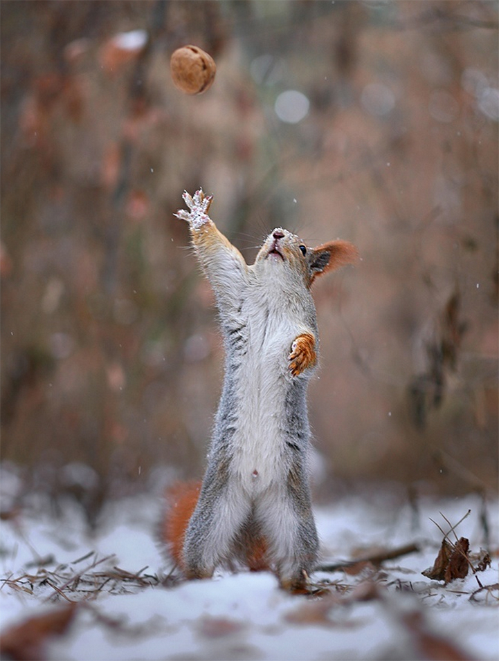 Two Adorable Squirrels Take Photos Play Catch And Build