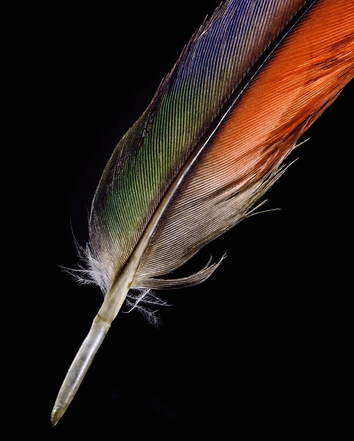 photos explore the exquisite details of bird feathers around the world