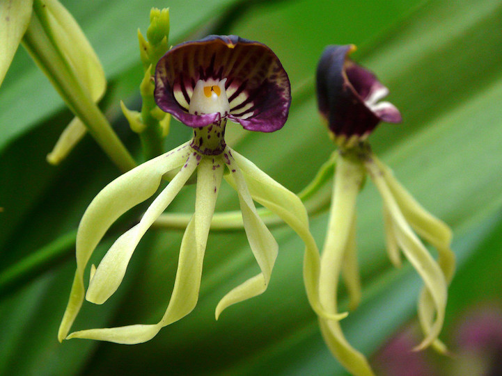 Wondrous World Of Flowers That Look Like Something