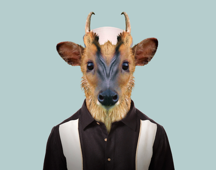 yago partal baby animal portraits animals dressed like humans muntjac